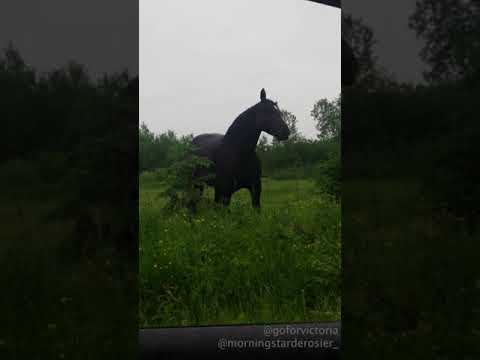 Carol Miller - Horse dances to Fleetwood Mac!