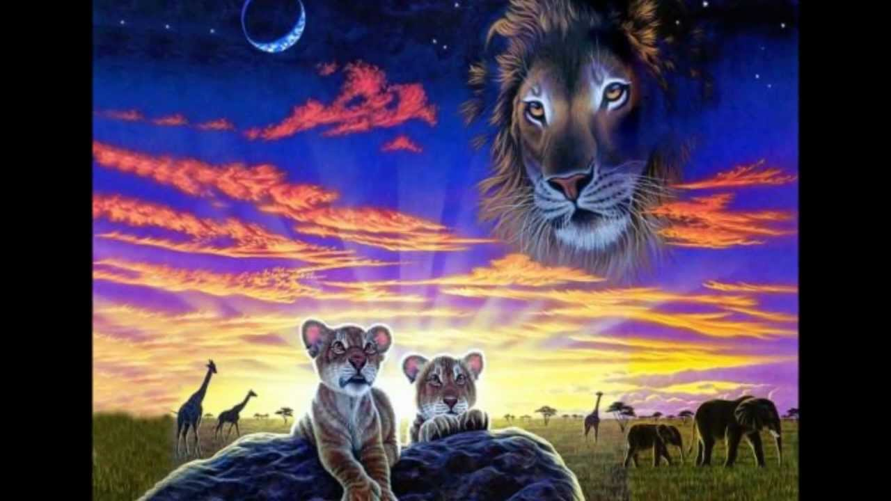 This is our world too - Tigers/Lions/Dolphins/Wolves ... - photo#10