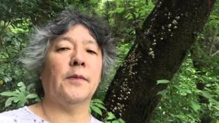 茂木健一郎が、森の中で、人間の脳が森に癒やされる理由について考察し...