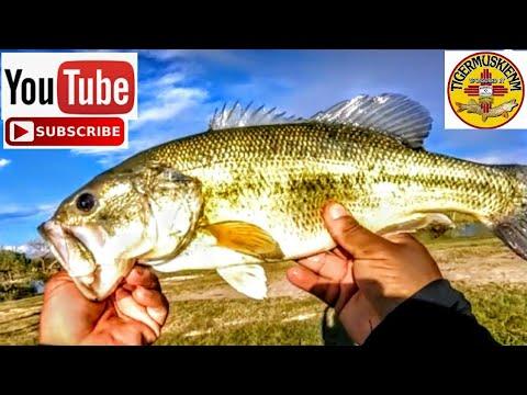 Spring Equinox 2019 Bass Fishing Isleta Lakes