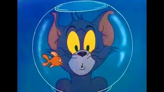 Tom And Jerry English Episodes - Casanova Cat - Cartoons For Kids