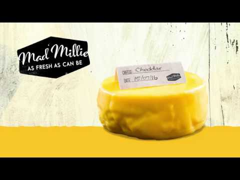 How to Make Cheddar Cheese with Mad Millie