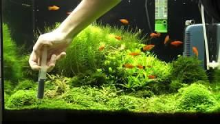 Обзор аквариумов 1