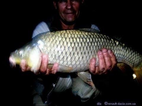 Ловля карпа ночью, рыбалка на карпа, поплавочная рыбалка - YouTube