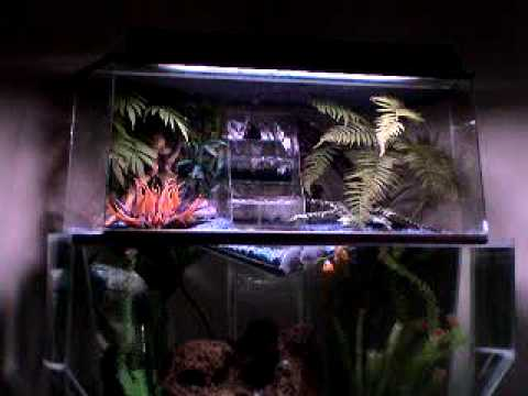 Aquarium terrarium hybrid youtube for Fish tank terrarium