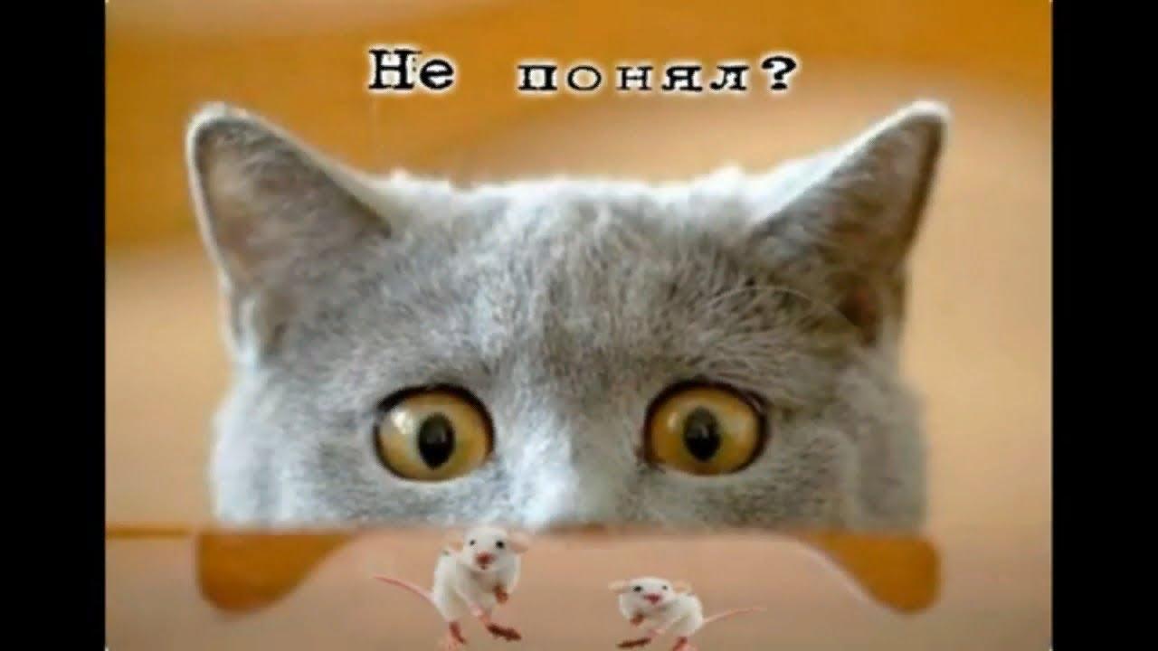 Прикольные картинки с котами/Смешные картинки с надписями ...