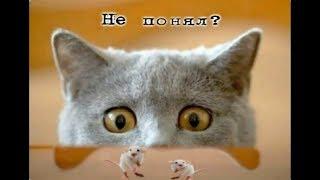 Прикольные картинки с котами/Смешные картинки с надписями