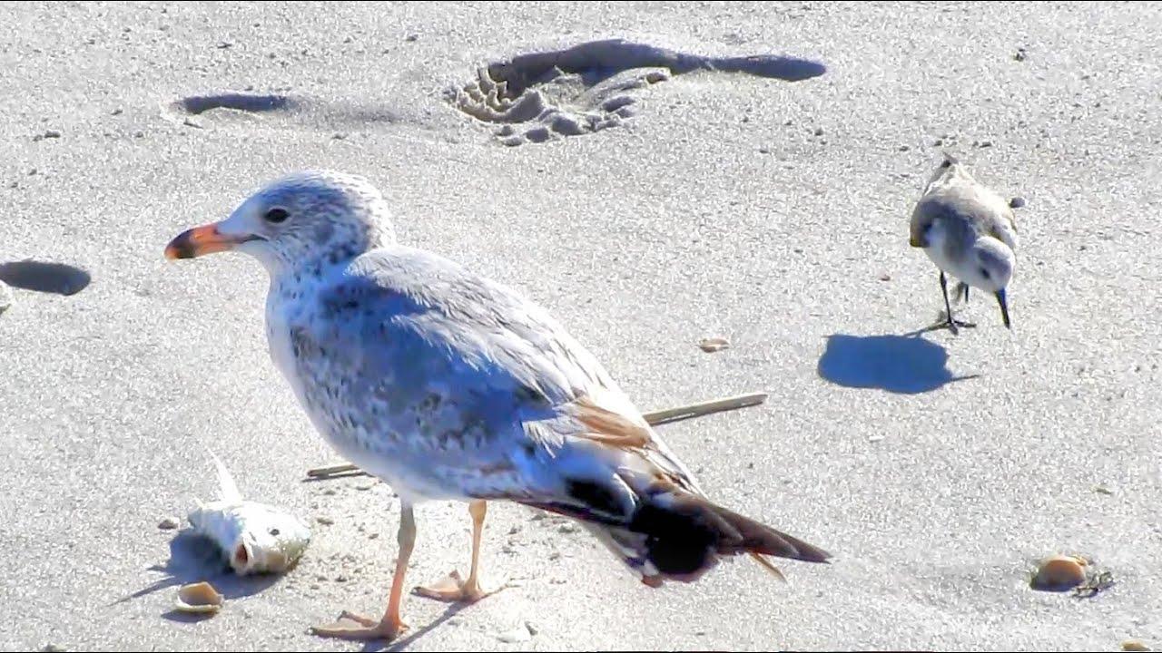 florida winter beach birds youtube