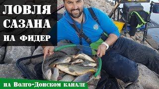 Ловля сазана на фидер на Волго-Донском канале осенью: Рыболовный дневник