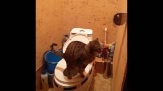 Кот ходит на унитаз и смывает за собой