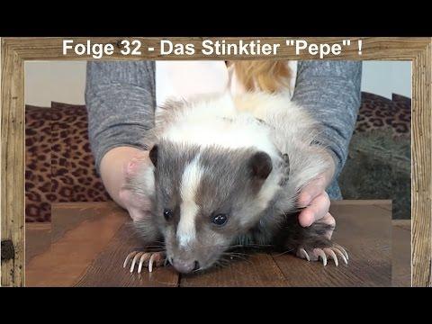 Frohe Weihnachten Du Widerliches Stinktier.Baixar Stinktier Stinktier Download Stinktier Stinktier Dl Músicas