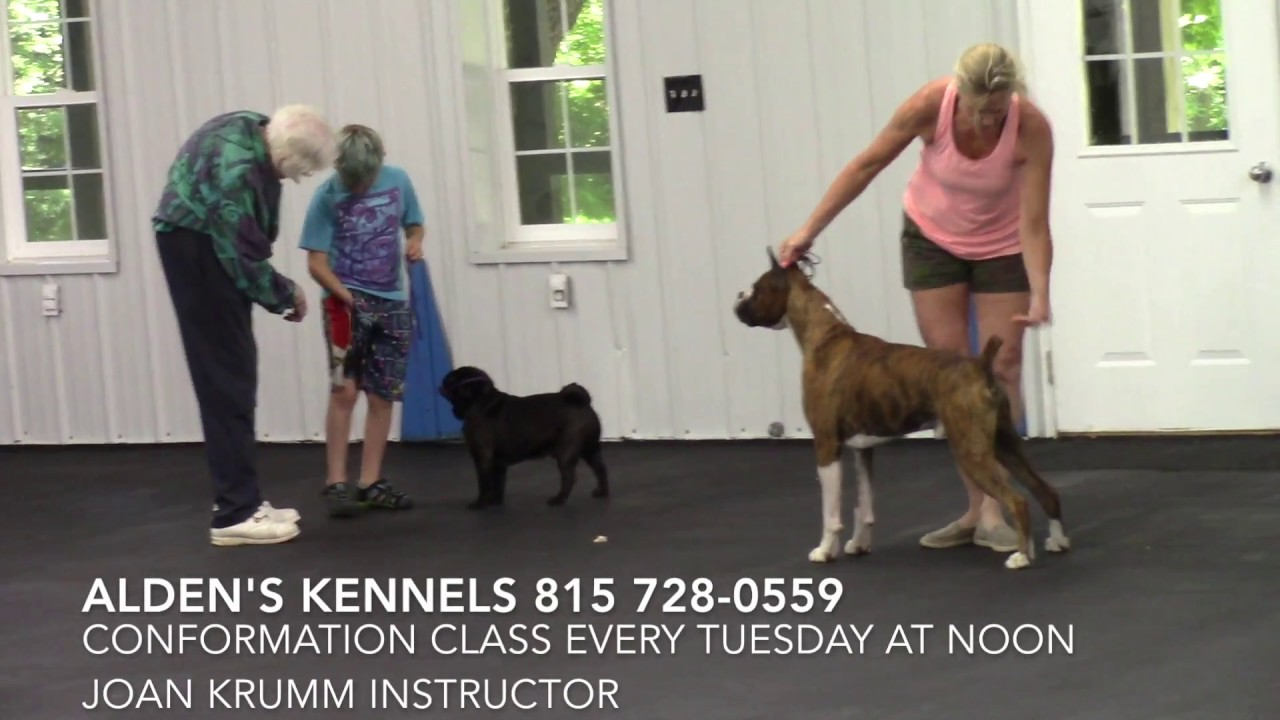 Aldens Kennels Conformation Class McHenry IL