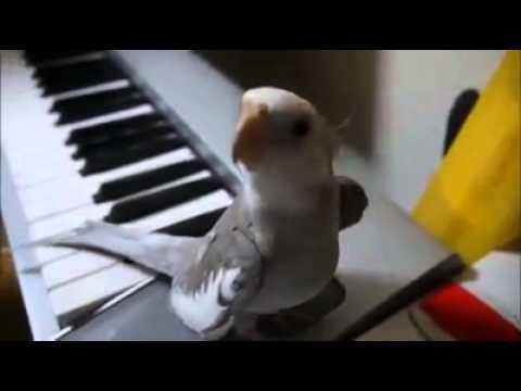 Mijn lieve vogel