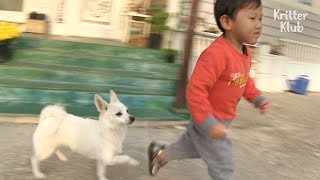 This Dog Doesn't Let This Kid Alone Even If He's Not This Own Family..? | Kritter Klub