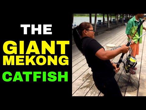 GIANT Mekong Catfish | Catching MONSTER Catfish In Thailand