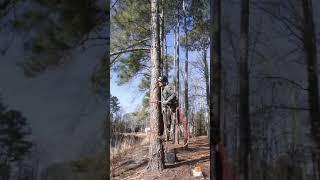 รองเท้าปีนต้นไม้