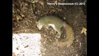 Squirrel Decomposition, Time-lapse in 1 week
