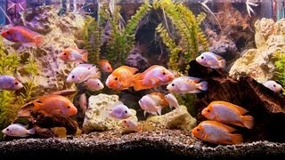 How To Pick A Fish Tank Filter | Aquarium Care