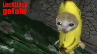 Meine Zuschauer haben mir mal wieder Katzenbilder geschickt...
