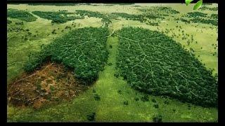 Сегодня Всемирный день защиты леса