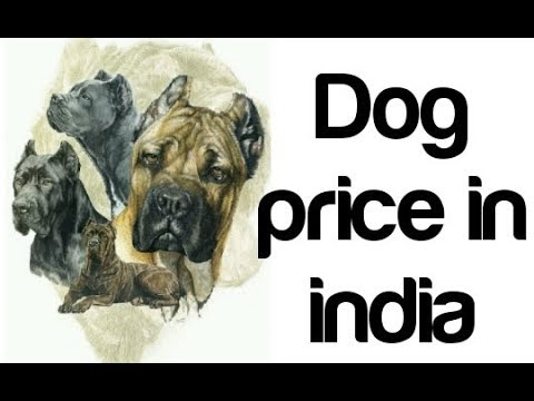 Dog price in india in hindi