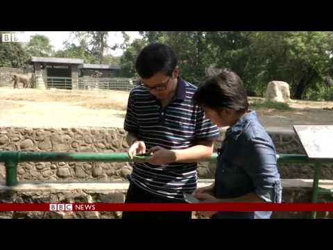 Jakarta zoo launches a phone app to help visitors   BBC News