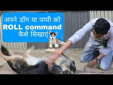 How to train a dog Roll command (Hindi) | Dog training | Roll over command |