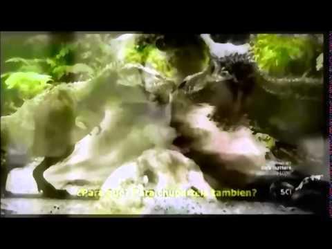 Reviving Ophelia the Dinosaur Renaissance Part 4