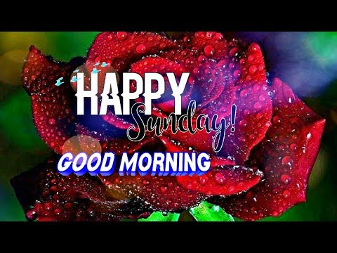Happy Sunday Good Morning Whatsapp Video Hd Youtube