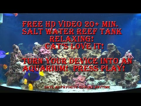 Salt Water Fish Tank Aquarium Reef Marine Free Screen Saver for Phone PC or Mac Fishtank