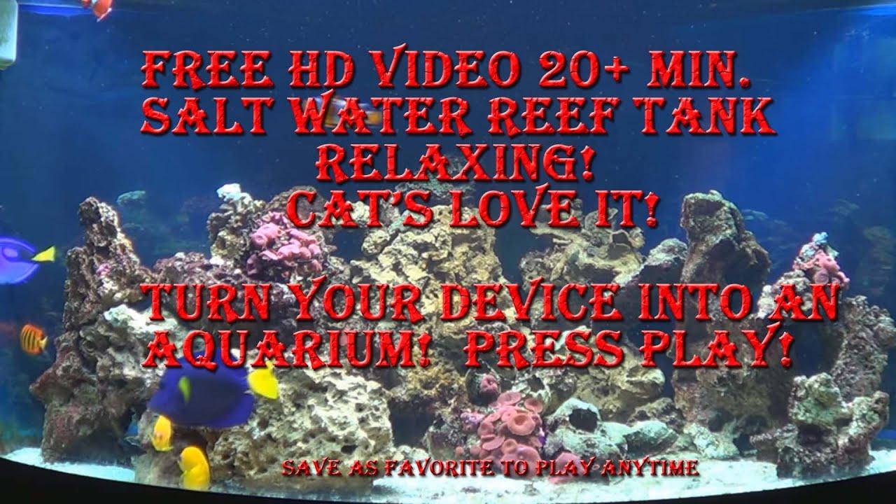 Salt Water Fish Tank Aquarium Reef Marine Free Screen Saver for
