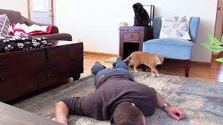たまには下僕も猫の愛を感じたい。カリスマ猫下僕のクリスさんも、愛猫の前で死んだふりをしていた。
