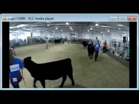 2016 Lancaster County Super Fair - 4-H & FFA Beef Show Showmanship Classes