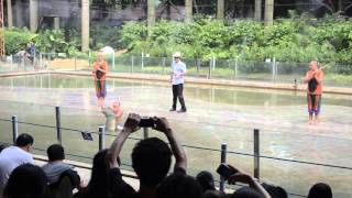 china crocodile show