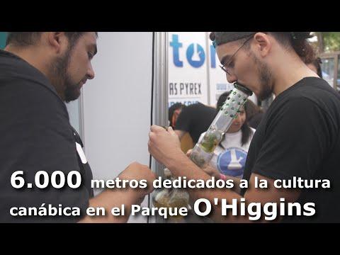 Inicia en Chile Expoweed