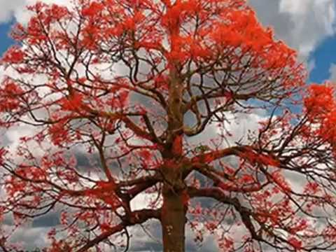 Mix - COLD CHISEL- FLAME TREES