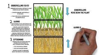 Core Nutrients - Ep. 1 - Plant Hormones