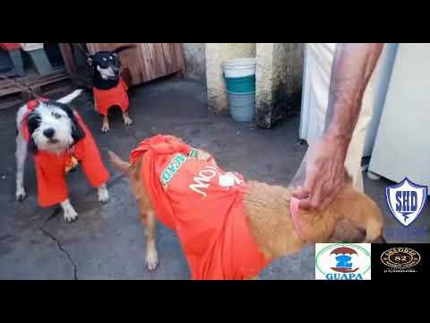 GUAPA - Grupo Umbrella de Apoio aos Protetores de Animais com Gratidão 82 e Seja Hoje Diferente.