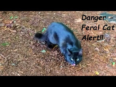 Eastern Towhee Alarm Call - Feral Cat Alert!