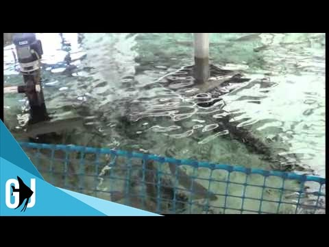 #239: Tour Around The Fish Hatchery - Salmon & Shad