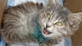 Маленький котёнок бросался в ноги каждому встречному, мяукал и заглядывал в глаза…