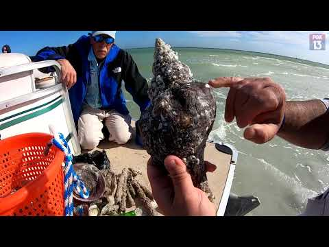 What's That Shell? Identifying Common Seashells In Florida
