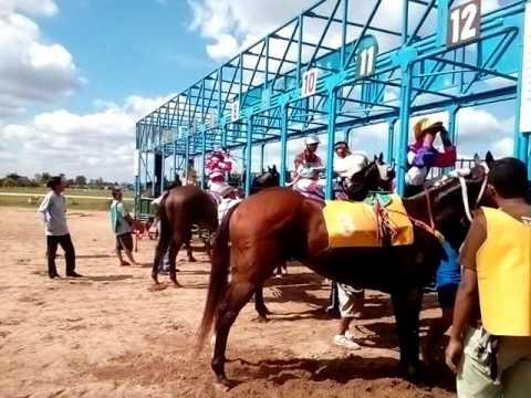 ม้าแข่งอุดร