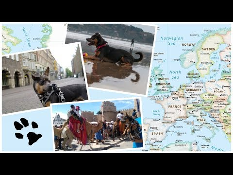 Fabio, The Traveling Dog - Europe 2017/18 | Inspired by travel