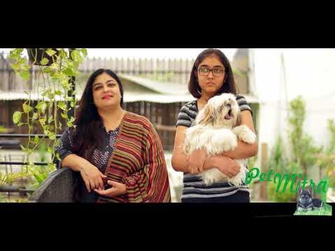 Shih tzu | Male | Pet Parent Mrs Neetu Ahuja| Dog Lovers