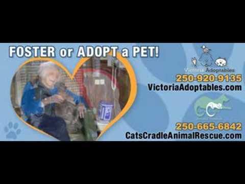 Cat's Cradle Animal Rescue