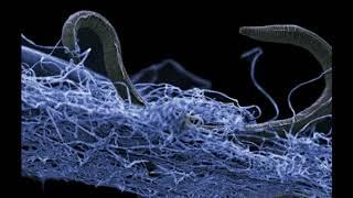 Scientists Identify Vast Underground Ecosystem That Is Twice The Size Of World