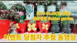 [황금정원 Golden garden,  #succulent] 500 #구독감사이벤트당첨자발표합니다