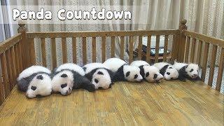 ほっこりにんまり今日のスタートはコレで決まり!パンダ子パンダBEST5動画これくしょん