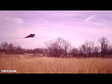 Pheasant And Quail Hunting Iowa